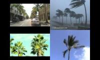 Palms in the Wind (relaxing)