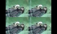 Otters Otters Otters