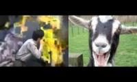 Goats Screaming At Yellow