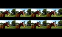 8 horses compilation of horse stuff innit