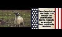 Goats for America, America for Goats