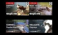 A selection of bird cams