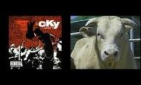 cky bull riding awesome