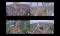 Birds live webcam Mashup
