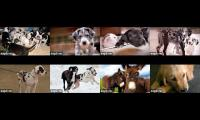 Thumbnail of Service Dog Project + WCC